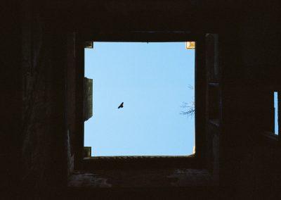 bird over witley